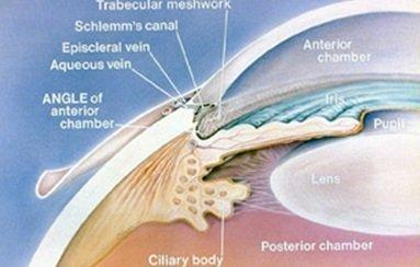 anatomia umore occhio